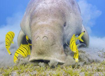 Aqua Blu-Von Bali nach komodo-Expedition kreuzfahrt Spezialist