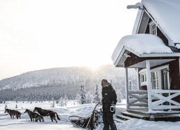 Schlittenhunde Fjellborg Arctic Lodge Schweden Lappland
