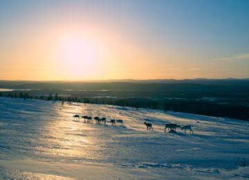 Schwedisch Lappland Winter Arctic Wilderness Fjellborg Lodge
