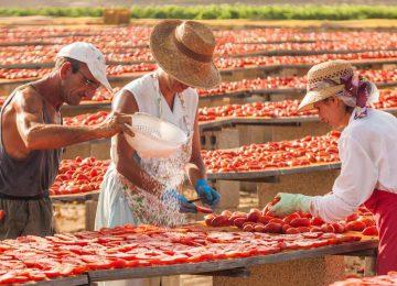 i_contadini_Trockung Pomodori