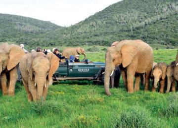 Kariega Game Reserve©elephant-herd