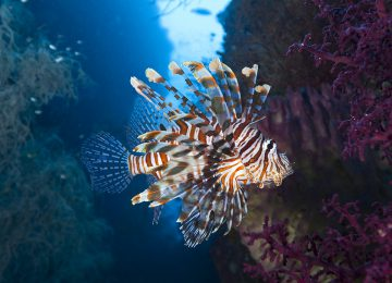 LionfishSelect Luxury Travel Aqua Blu Indonesien Raja Ampat