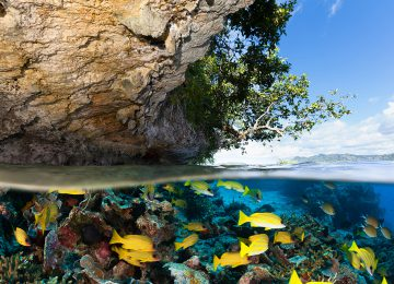 Tropical Island and Underwater Paradise for Divers, Raja Ampat, Indonesia