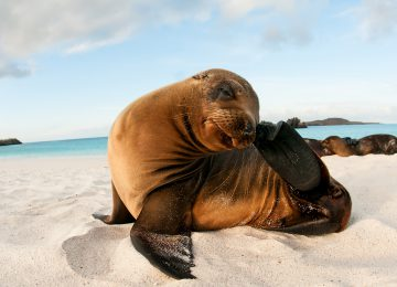 sea-lion©big 15