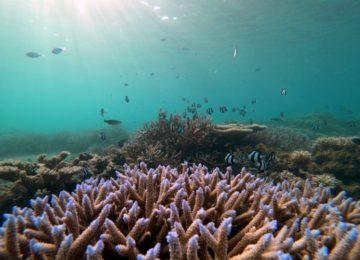 Korallengarten ©Shanti Maurice