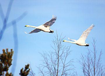 wildlife_Schweden